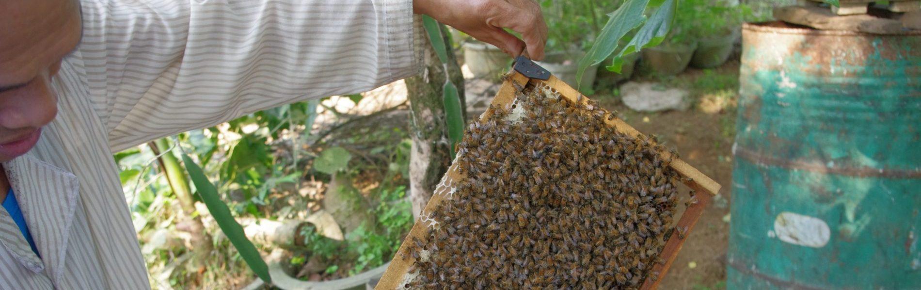 庭先での養蜂の様子