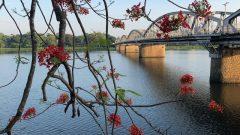 チャンティエン橋と火炎樹