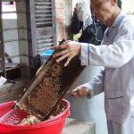 庭先での養蜂、フエ省丘陵地