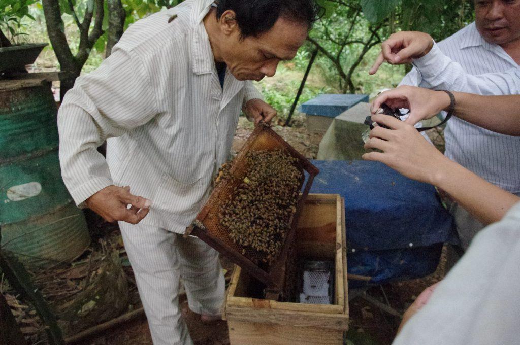 アカシア林が近くにある庭先での養蜂、フエ省