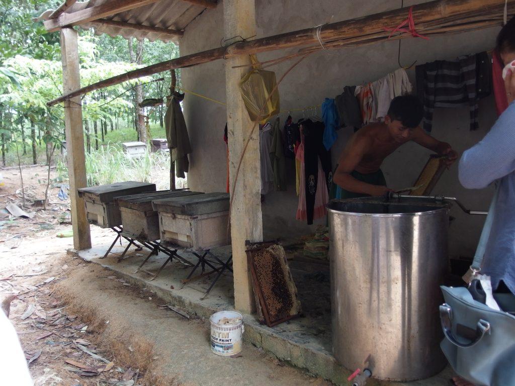 庭先での養蜂、フエ省、少数民族