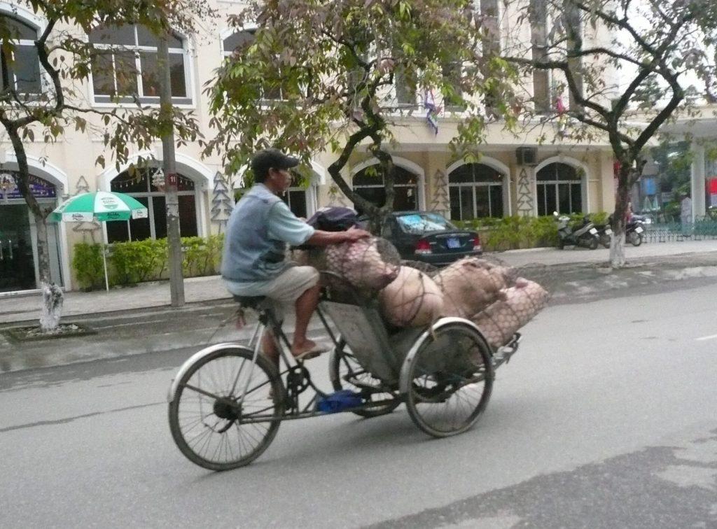 ブタを運ぶシクロ