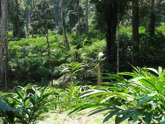 自然木の下のカルダモン
