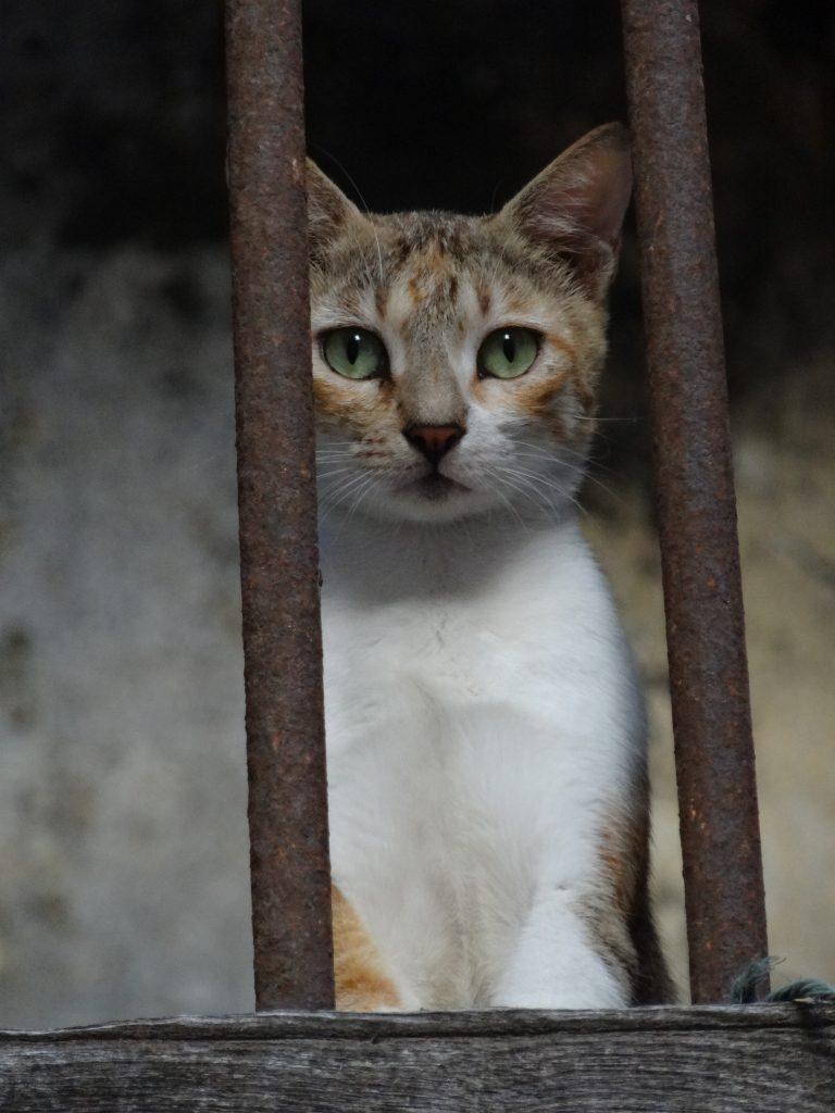 ザンジバルの猫、タンザニア