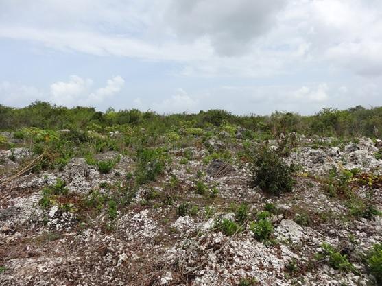 タンザニア、ザンジバル、石灰岩が露出している畑