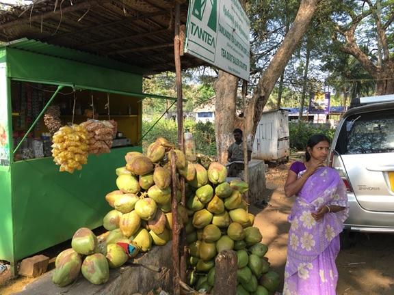 簡易なつくりの売店とココナツ,南インド