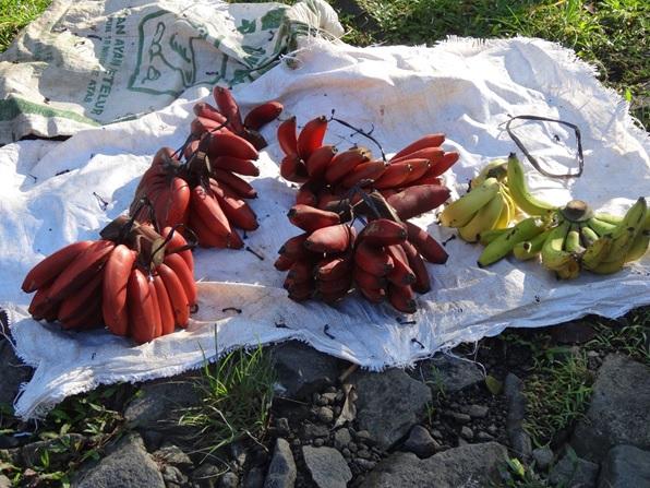 肥料袋を敷いてバナナを商う,インドネシア・ジャワ島