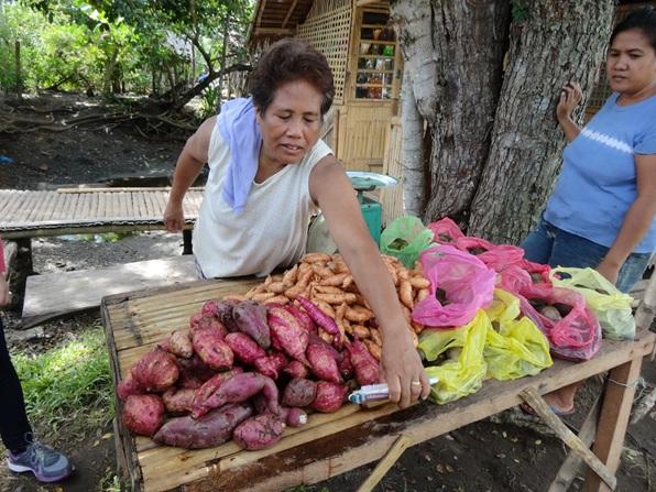 竹でつくった台の上に並ぶサツマイモ,フィリピン・パナイ島
