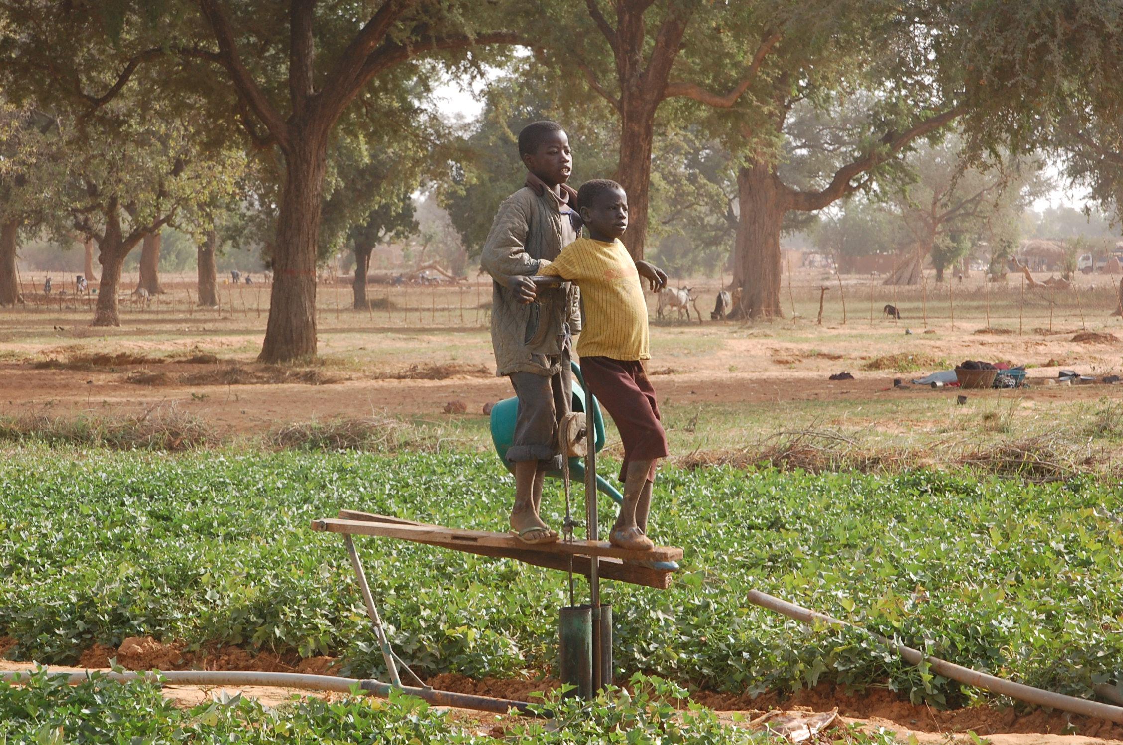 乾季かんがい畑の足踏みポンプ(2011年1月ブルキナファソ)