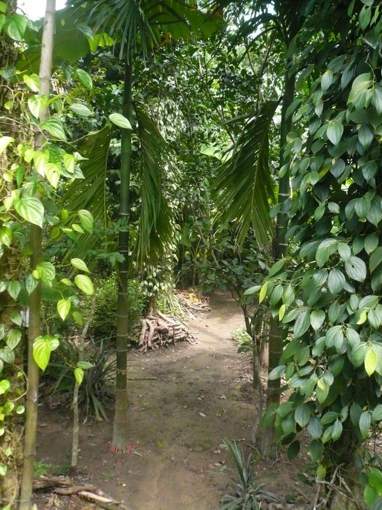 フック・ティック村1、ベトナム