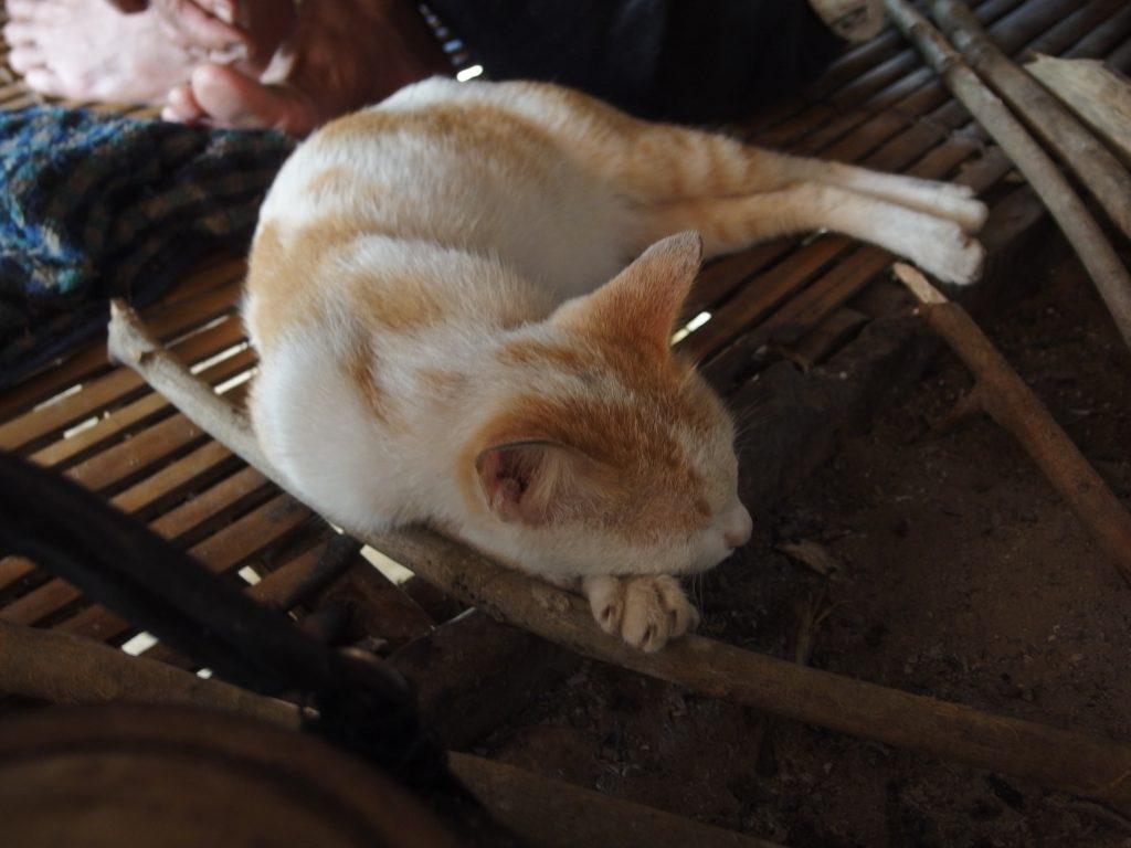 囲炉裏の脇に猫、ベトナム