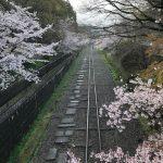 202103 sakura-kyoto